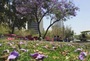 Grandpark Bloom